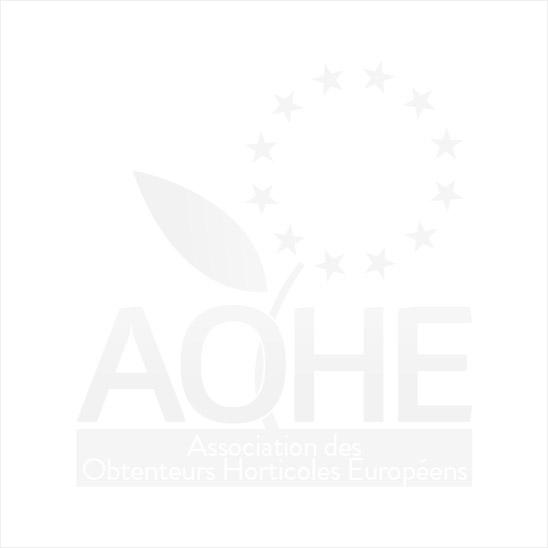 Euro Pepinieres