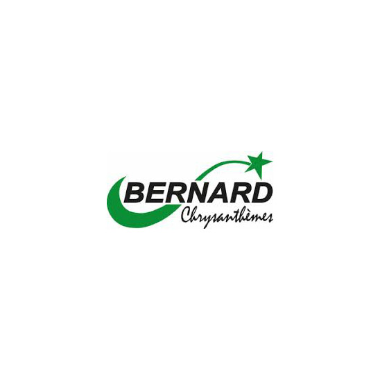 Bernard Chrysanthèmes