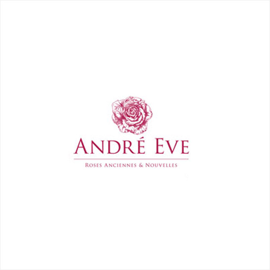 Les Roses Anciennes Andre Eve