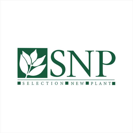 Sélection New Plant